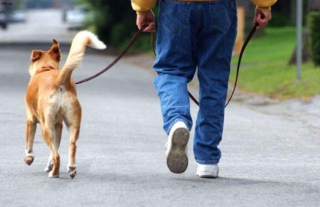 Basta feci canine in strada a Pachino: multe fino a 500 euro