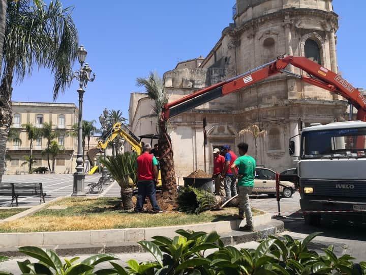 Floridia, una nuova palma piantumata in piazza Umberto I°