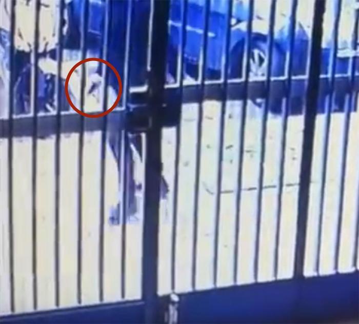 Napoli, in un video il killer che scavalca la bimba: per Noemi una ferita da guerra