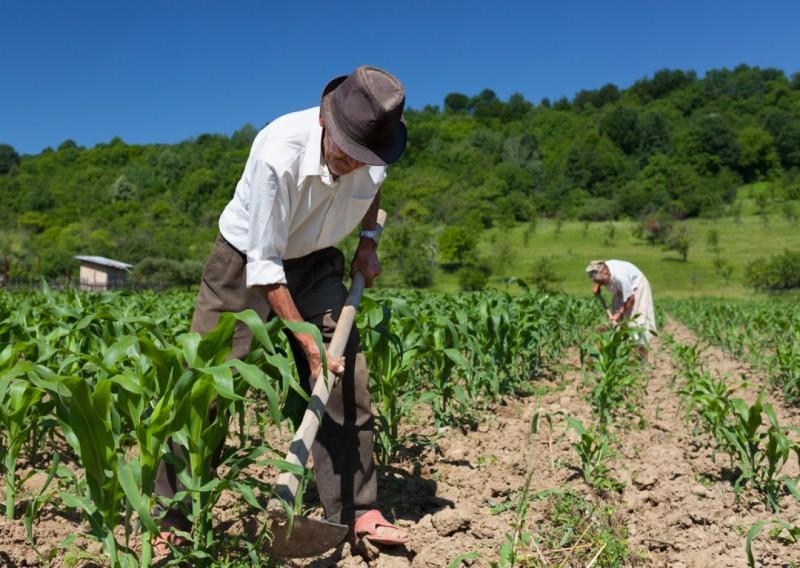 """Agricoltura in Sicilia, Pd: """"Sbloccare i contributi per il biologico"""""""