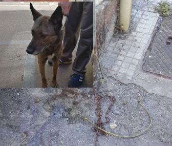 Lega il cane a un palo e lo affama,  indagata a Catania