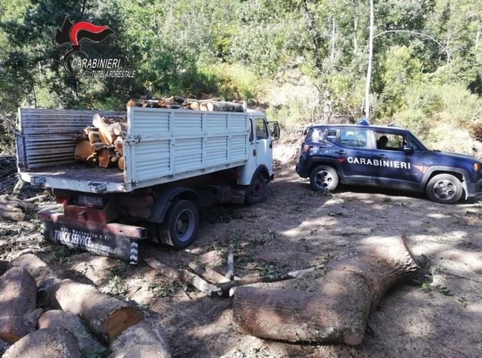 Santa Caterina dello Ionio, tagli alberi in un bosco del Comune: arrestato