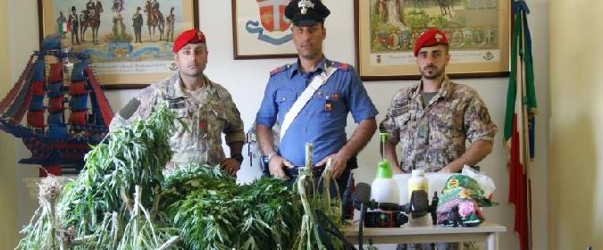Bronte, innaffiavano marijuana con acqua pubblica: 3 arresti