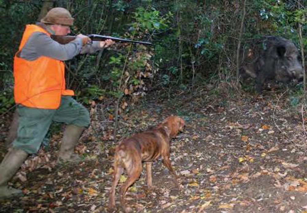 Domani pre apertura della caccia in Sicilia tra le polemiche