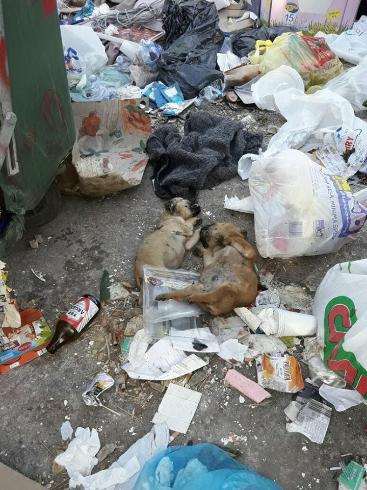 Siracusa, cuccioli morti tra i rifiuti: la foto denuncia degli animalisti