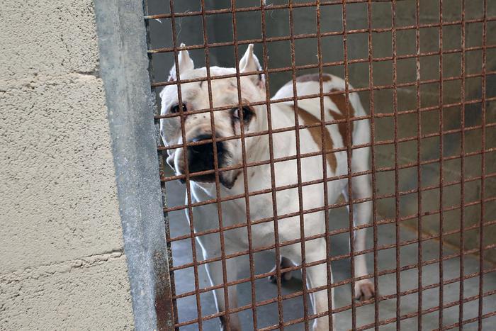 Lega cane all'auto e lo trascina, denunciato nel Casertano