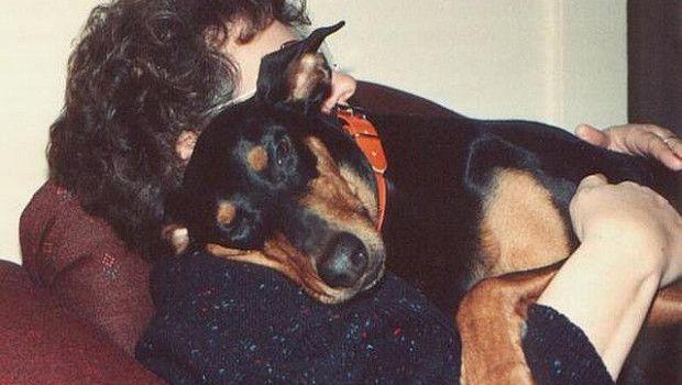 Contributo di 400 euro l'anno a Floridia a chi adotta un cane randagio