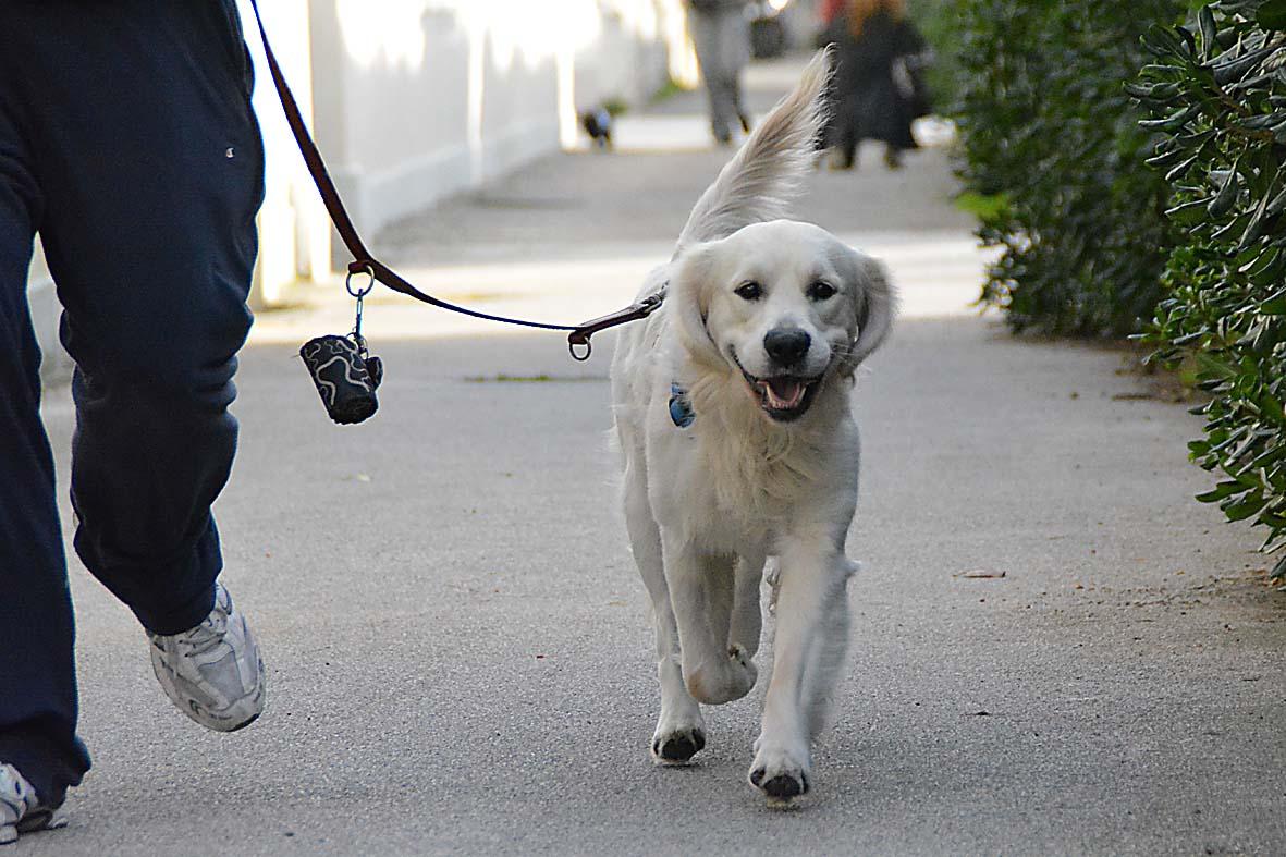 Siracusa, nonostante i domiciliari porta a passeggio il cane: arrestato
