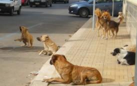 Siracusa, il Parco della Neapolis invaso dai cani randagi: pericolo per i turisti