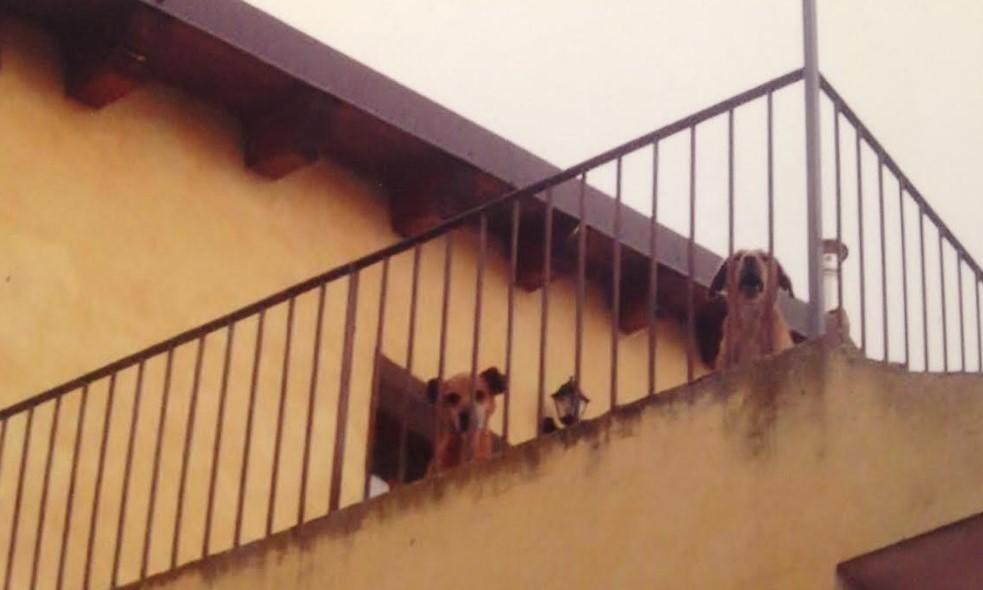 Chiaramonte, una casa trasformata in un canile: interrogazione al sindaco