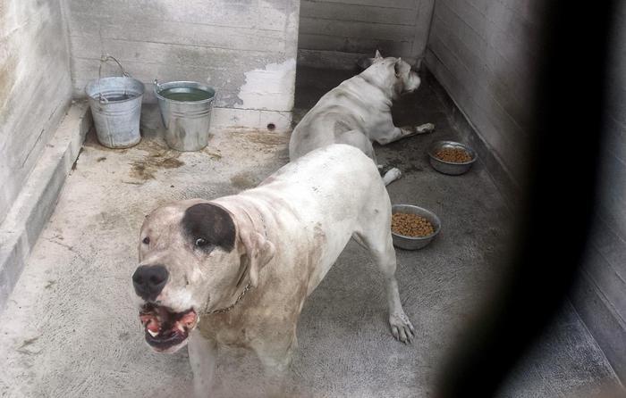 Cani in riabilitazione: sbranarono e uccisero bimbo a Mascalucia