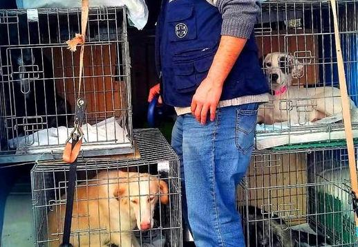 Venti cani e un gatto rinchiusi in un furgone: 8 denunciati a Catania