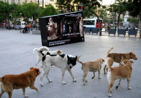 Cani avvelenati a Sciacca, due persone sospettate