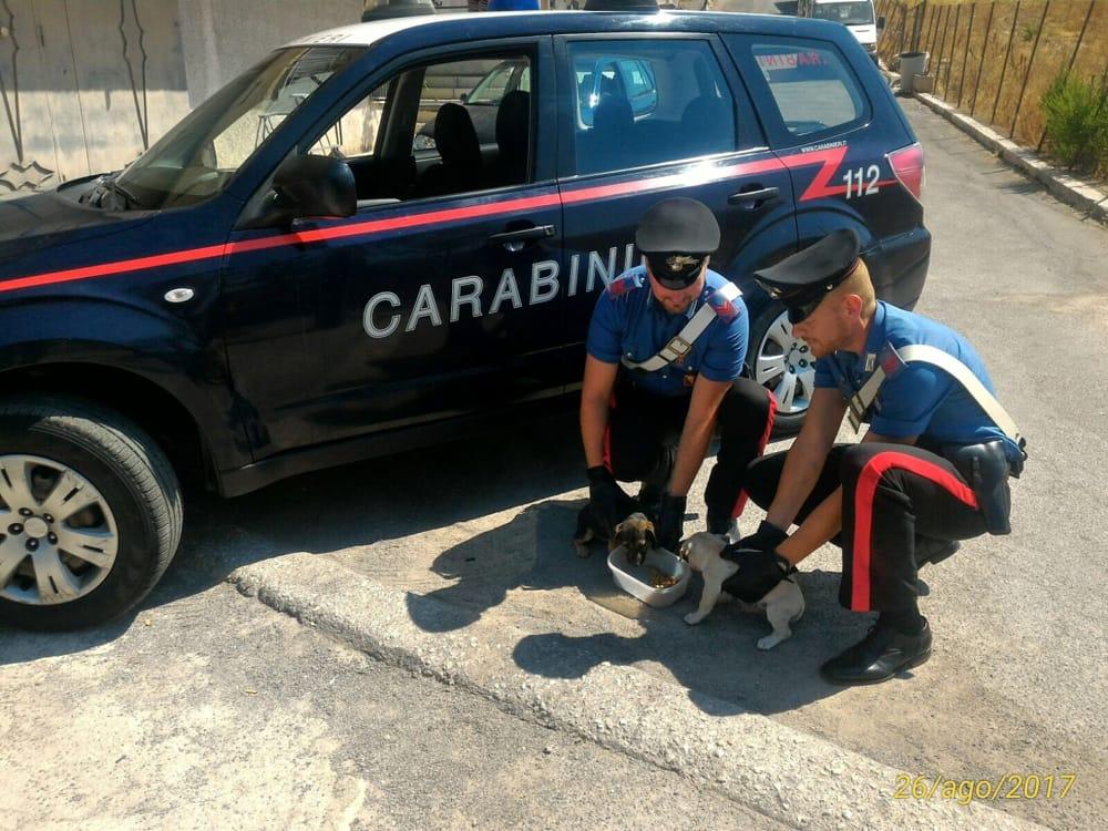 Abbandonano cuccioli di cane nel Palermitano: due denunciati