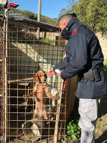 Cani senza cibo e senza acqua a Crotone, due uomini denunciati