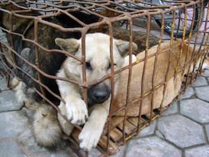 Catania, maltrattamento di animali e gestione illecita di rifiuti: 1 persona deferita