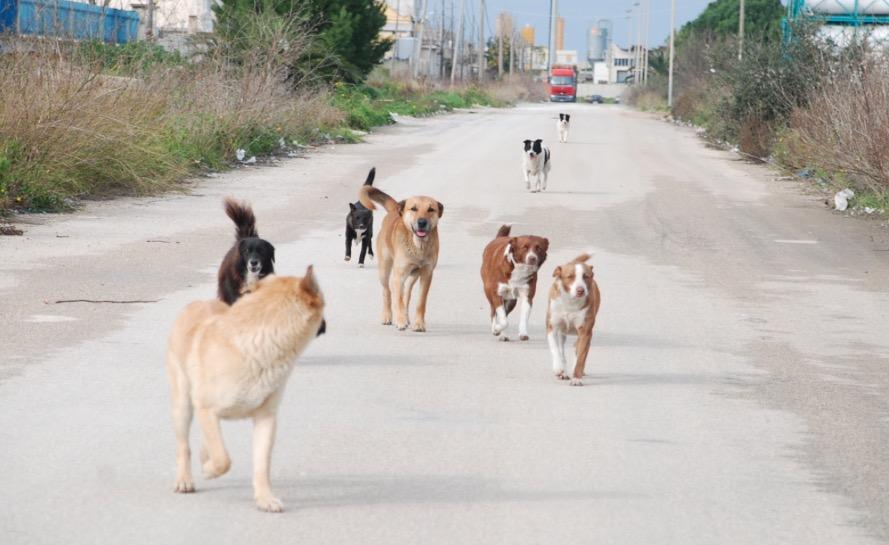 Randagismo, cani trovati impiccati a Rosolini: altri avvelenati a Paternò