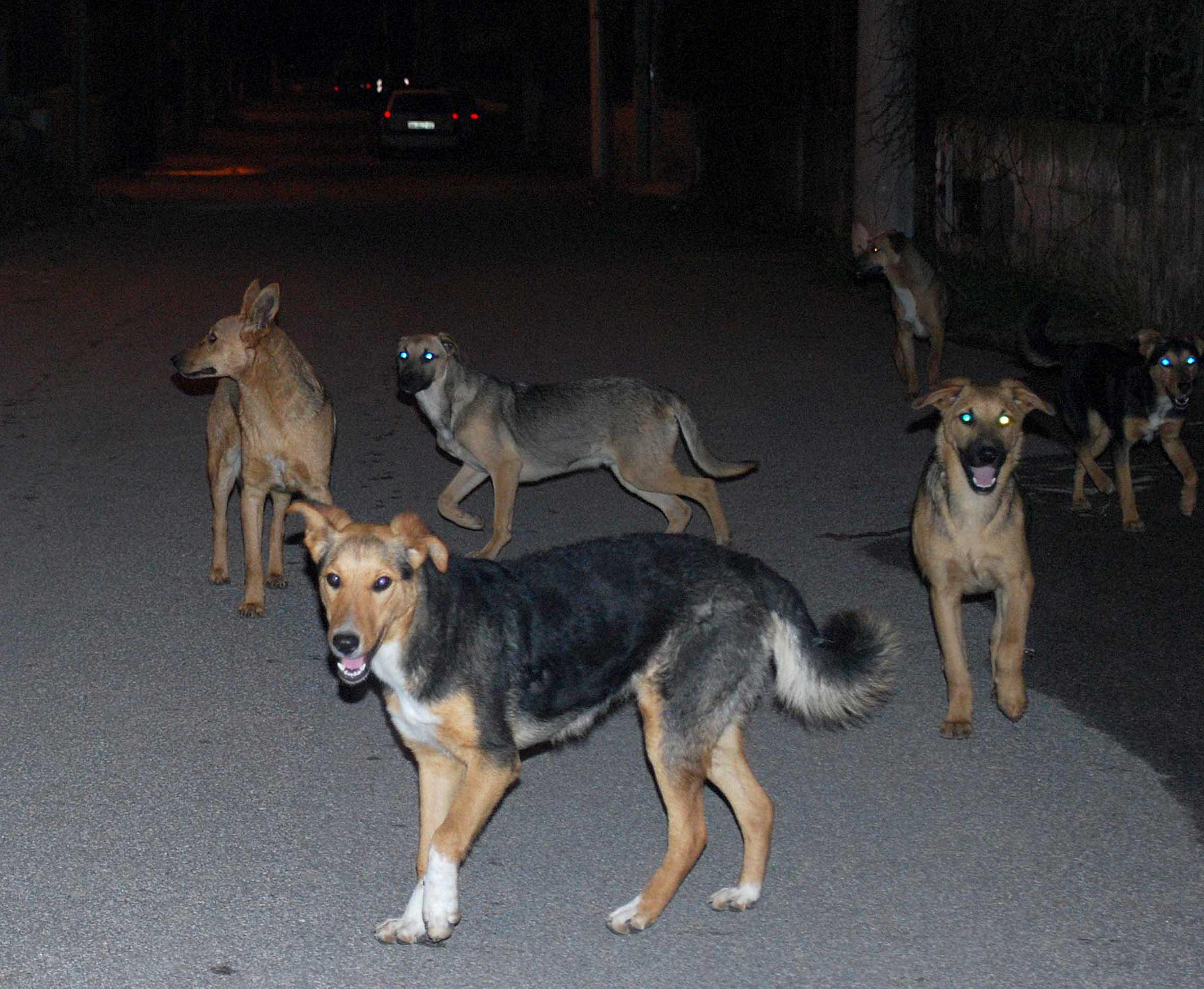 """""""Troppi cani randagi a Catania, si blocchi questo fenomeno"""""""