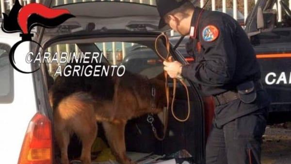 Nasconde l'hashish in giardino, ma il cane la scova: arrestato a Ribera