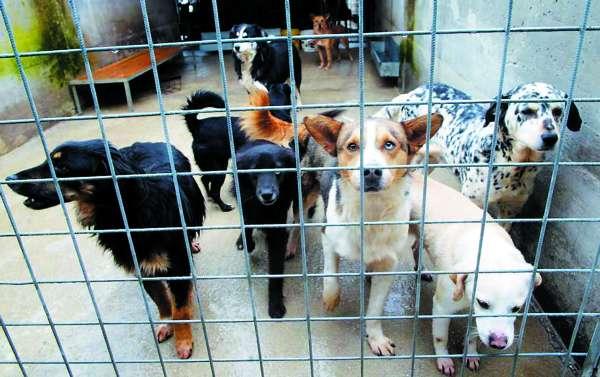 Animali: ancora 29 cani in canile Palermo, rinvio dei lavori