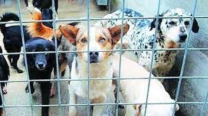 Siracusa, contributi per tre anni per chi adotta un cane