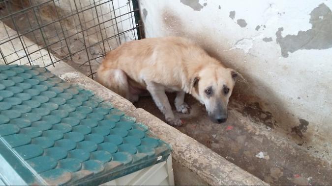 Catania, cani maltrattati e in mezzo alla sporcizia: 2 indagati (VIDEO)