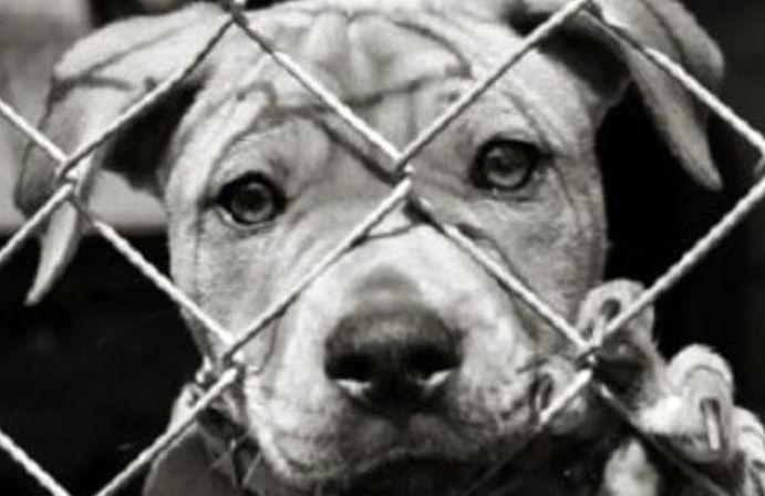 Sommatino, cucciolo rubato legato ad un cassonetto