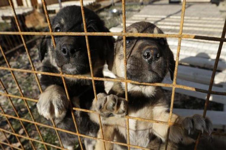 Marsala, sequestrato un canile abusivo con dentro 23 animali