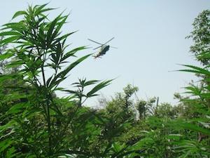 """Scoperte a Butera tremila piante di cannabis: il propeietario risulta """"irreperibile"""""""