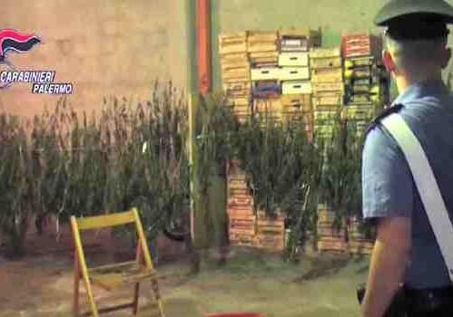 Palermo, coltivavano canapa indiana: tre arresti, uno è minorenne