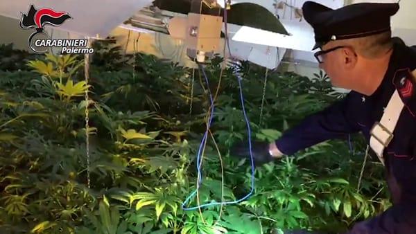 Coltivava cannabis in una villetta di Altavilla Milicia: arrestato