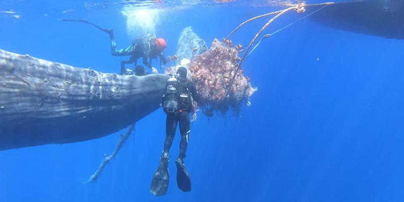 Altro capodoglio resta impigliato nella rete dei pescatori a largo di Salina