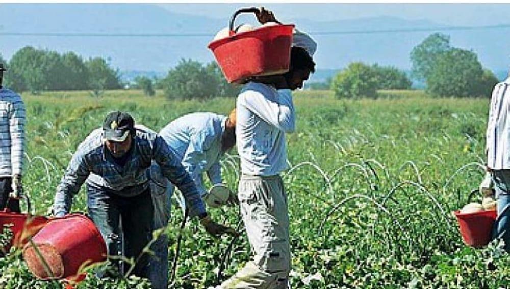 Controlli in 3 aziende agricole del Palermitano: 21 operai in nero