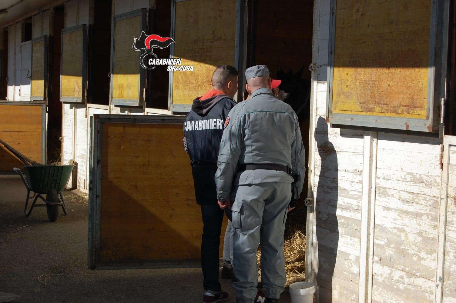 Siracusa, controllate 4 scuderie: multe per 40 mila euro