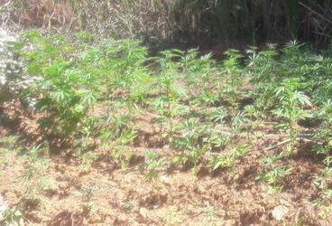 Carabinieri intervengono per un rogo e scoprono droga nel Cosentino