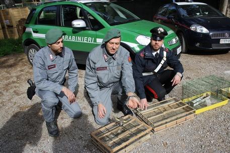 Denunciati a Palermo due venditori di cardellini: 300 volatili liberati