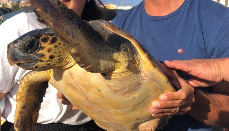 Caretta caretta in difficoltà salvata nel porto di Lampedusa