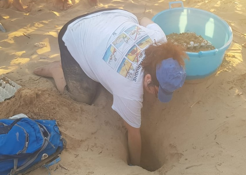 Modica, nella spiaggia di Marina messe in sicurezza 102 uova di Caretta Caretta