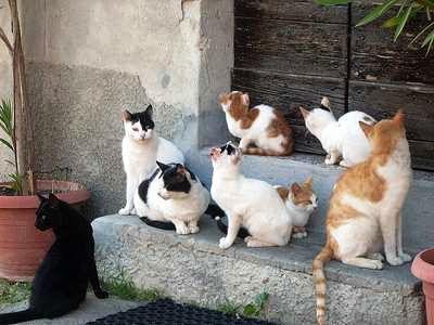 Catania, la vicina dà cibo ai gatti in cortile e lui tenta di investirla