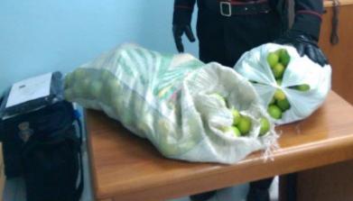 I carabinieri intervengono per un tentato furto di limoni a Rosolini