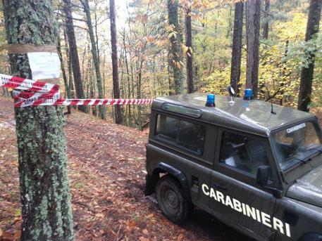 A Rossano tagliati alberi senza autorizzazioni, tre denunce