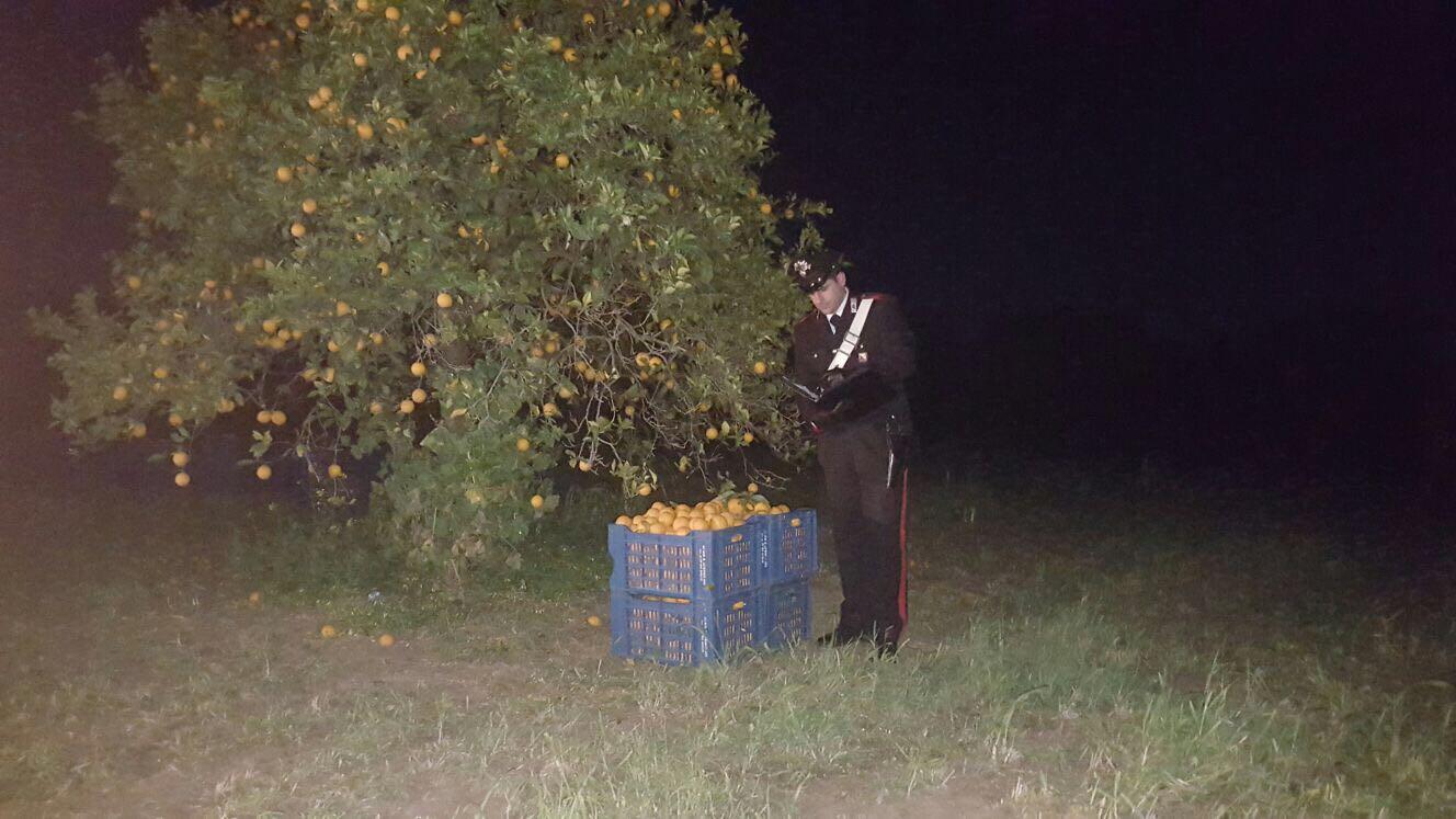 Sventato un furto di 360 chili di agrumi a Villasmundo