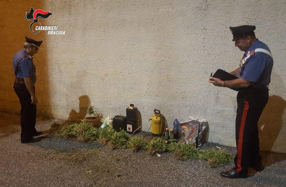 Scoperta piantagione di canapa a Lentini, agricoltore denunciato
