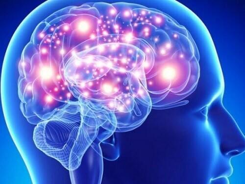 Cambio di paradigma su come il cervello apprende