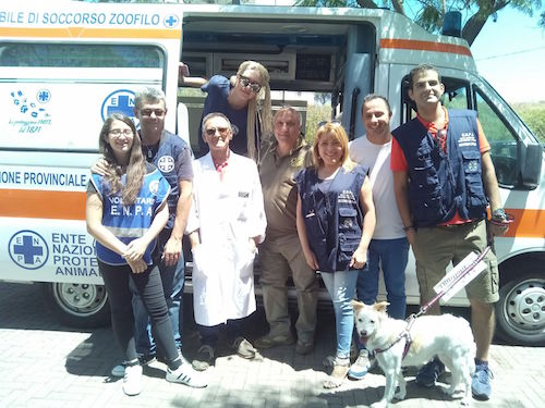 Catania, lotta al randagismo: 72 microchip e un'adozione