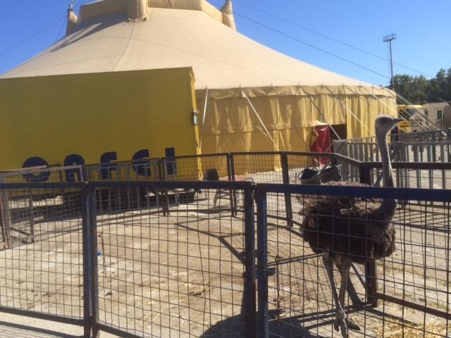 Augusta, lavoratori irregolari al circo: denunciato il titolare