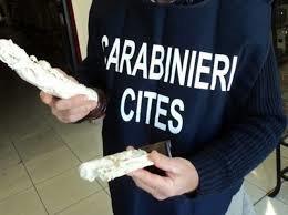 Siracusa, il Cites sequestra a Ortigia 37 monili privi di certificazione