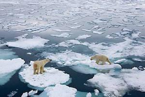Clima, l'ecosistema del Mediterraneo minacciato dal surriscaldamento