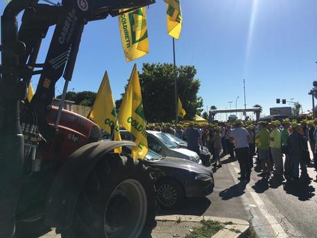 Bari, protesta Coldiretti: è 'guerra del grano', in mille al porto