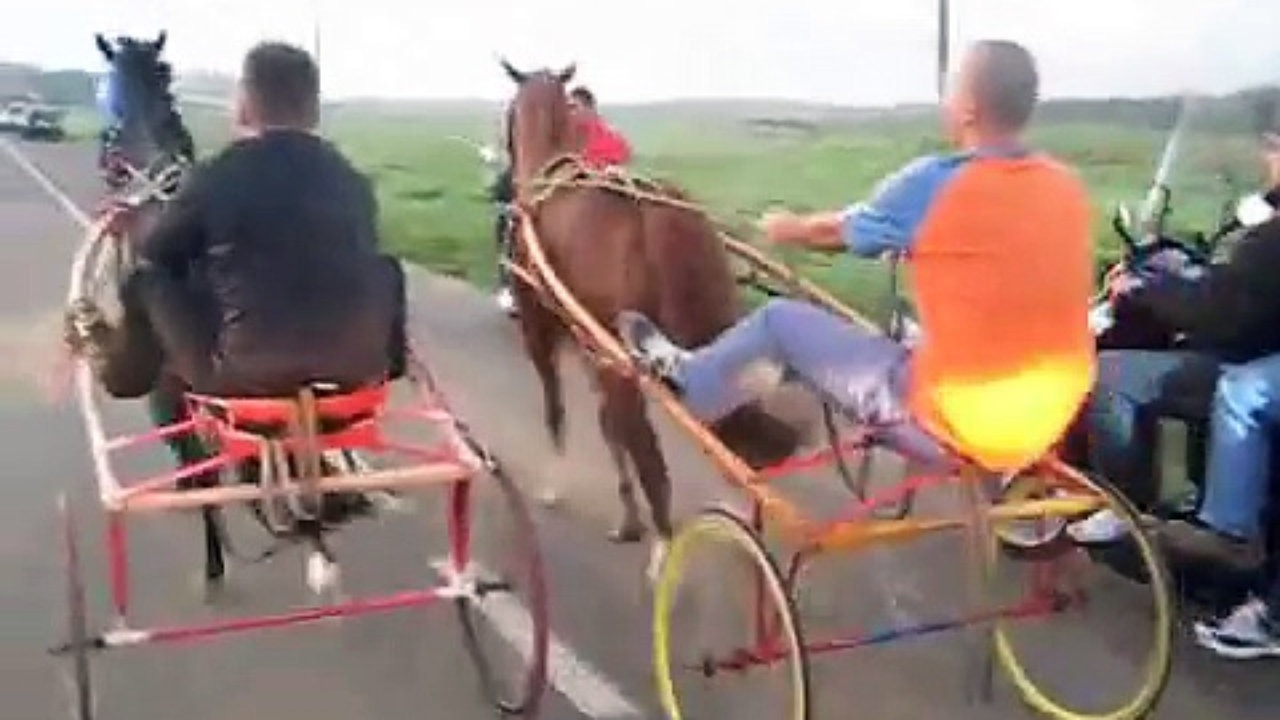Palagonia, corsa clandestina di cavalli: 16 persone denunciate